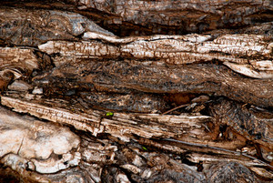 Wood Roots 1 Texture