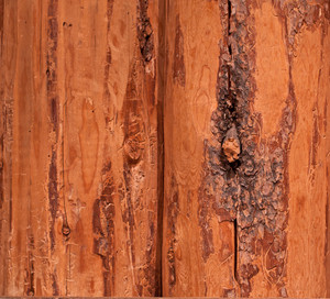 Wood Rough Log