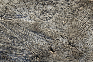 Wood Stumps 6 Texture