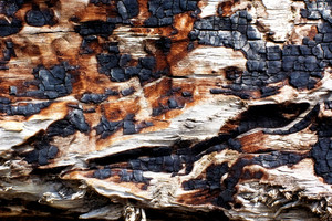 Wood Surface Texture 11