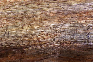 Wood Surface Texture 12