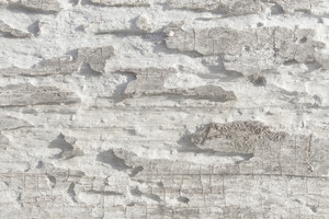 Wood Surface Texture 14