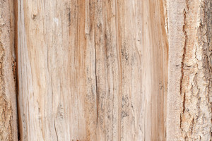 Wood Surface Texture 21