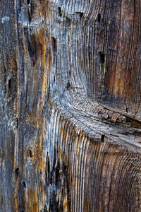 Wood Surface Texture 23