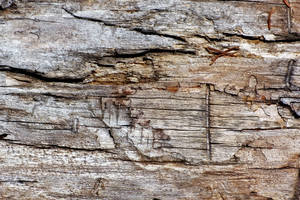 Wood Surface Texture 24