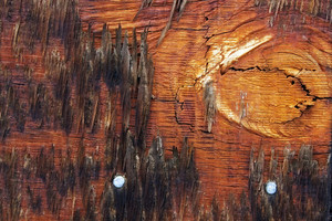 Wood Surface Texture 42