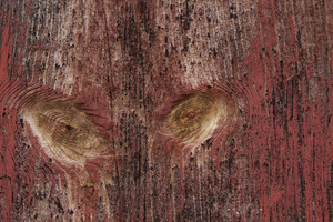 Wood Surface Texture 43