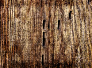 Wood Surface Texture 47