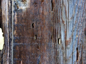 Wood Surface Texture 49