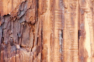 Wood Surface Texture 4