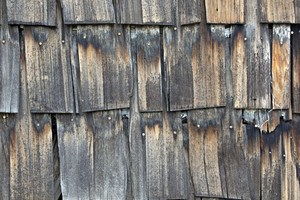 Wood Surface Texture 61