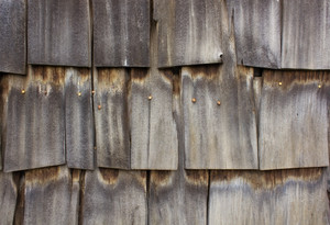 Wood Surface Texture 62