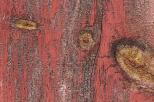 Wood Surface Texture 65