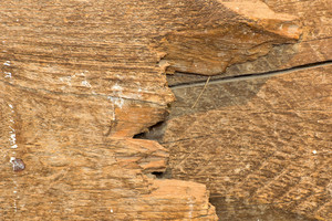 Wood Surface Texture 77