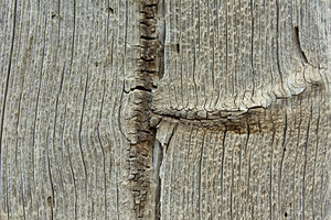 Wood Surface Texture 79