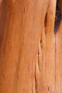 Wood Surface Texture 7