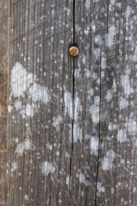 Wood Surface Texture 81