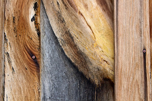Wood Surface Texture 82
