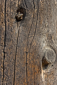 Wood Surface Texture 83