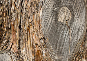 Wood Surface Texture 85