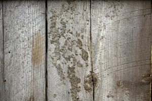 Wood Texture 13