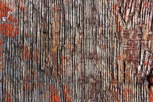 Wood Texture 238