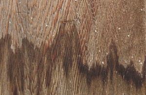 Wood Texture 57