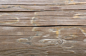Wood Texture 8