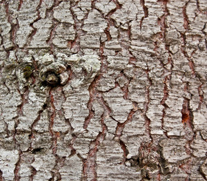 Wood Tree Bark