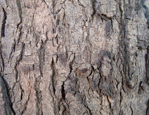 Wood_bark