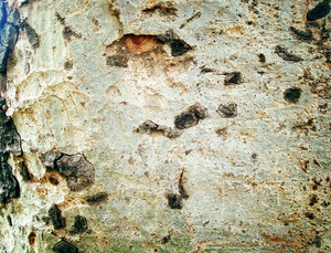 Wood_bark_surface