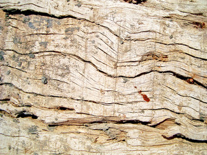 Wood_barn_background