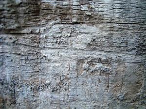 Wood_board_texture