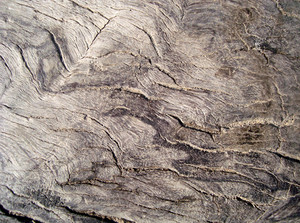 Wood_close_up