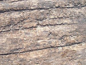 Wood_skin_texture