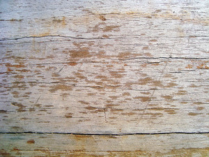Wood_surface_texture