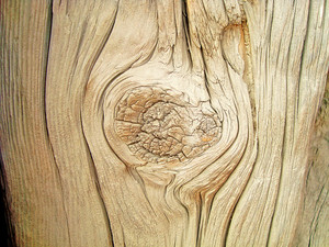 Wood_texture_knot