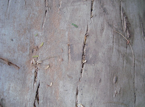 Wood_texture_old