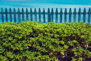 Wooden hedge on the beach against sea