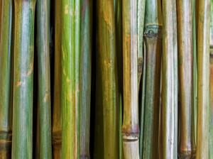 Wooden Texture 15