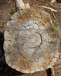 Wooden Texture 20