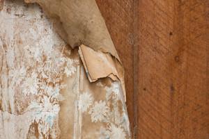 Wooden Texture 21