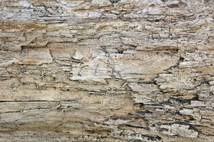 Wooden Texture 40