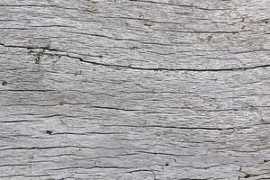 Wooden Texture 43