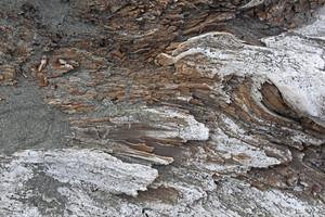 Wooden Texture 45