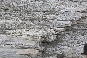 Wooden Texture 46