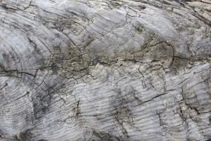 Wooden Texture 47