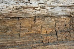 Wooden Texture 50