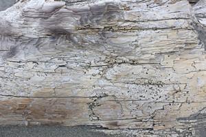 Wooden Texture 54