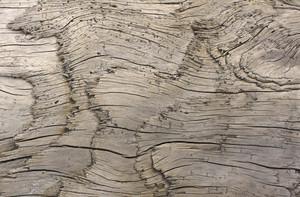 Wooden Texture 57